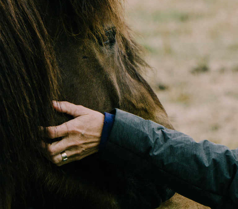 Life Coaching with Your Horse – Starter Monday Class